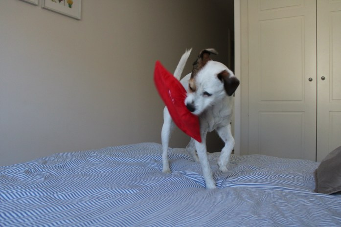Pancho-juguete-perros
