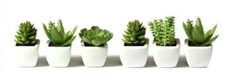 Plantas-interiores-para-purificar-el-ambiente-5