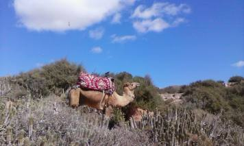tagazhout marruecos