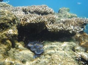 3 snorkeling (12)