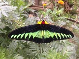 7 butterfly farm (1)