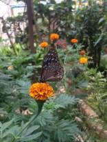 7 butterfly farm (2)
