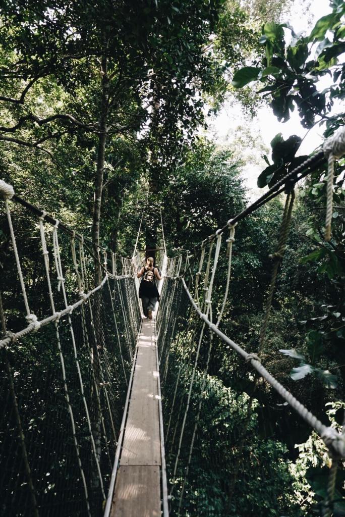 Canopy Bridge Taman Negara