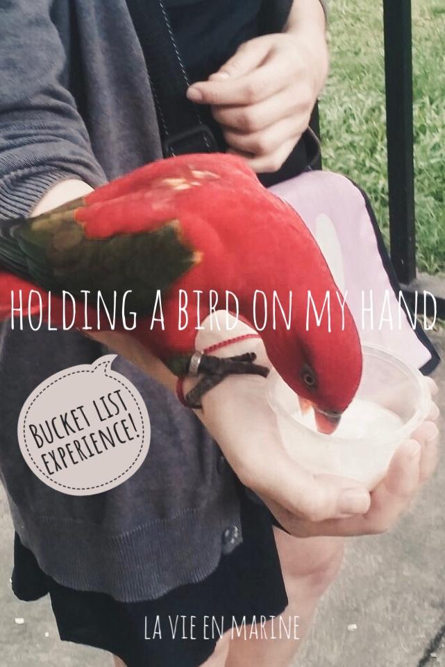 Pursuing my Bucket List: Holding a Bird on my Hand - La Vie En Marine