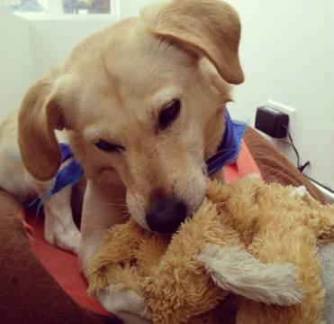 Hoy ya es un sano y feliz perro. Archivo particular.