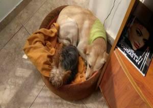 Aquí comparte cama con Bruna. Archivo particular.