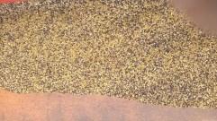 Mélange des semences