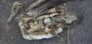 albatros plastique