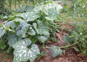 Qu'est-ce que l'agroécologie ?