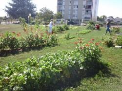 Jardin-partagé-Migennes-2016