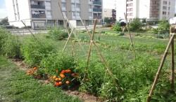 Jardin-partagé-de-Migennes-été-2016