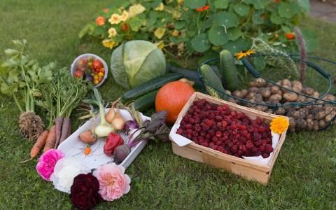 Petite histoire des fruits et des légumes