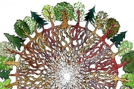 Le Wood Wide Web