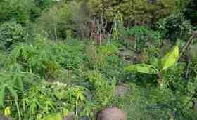 Le jardin créole
