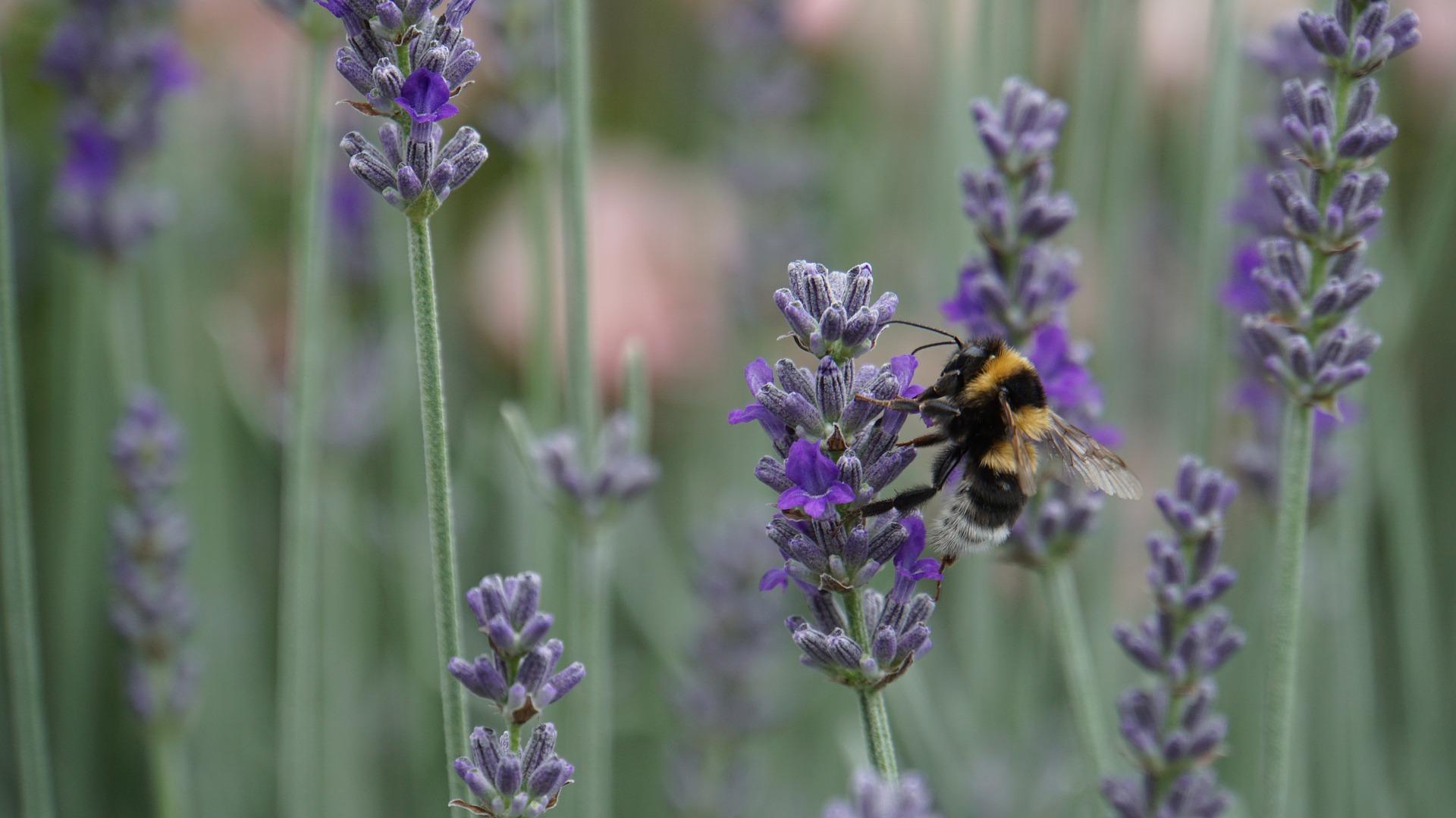 Accueillir et développer la biodiversité