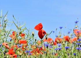 Créer une prairie fleurie