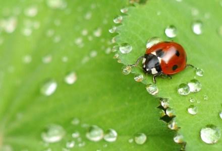 Conception, design de jardins écologiques