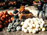 lavoies adrian pumpkins