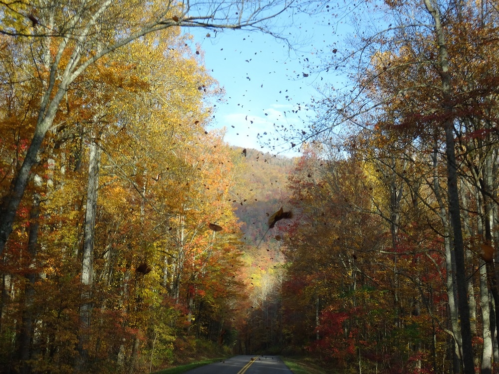 Great smoky mountains en automne