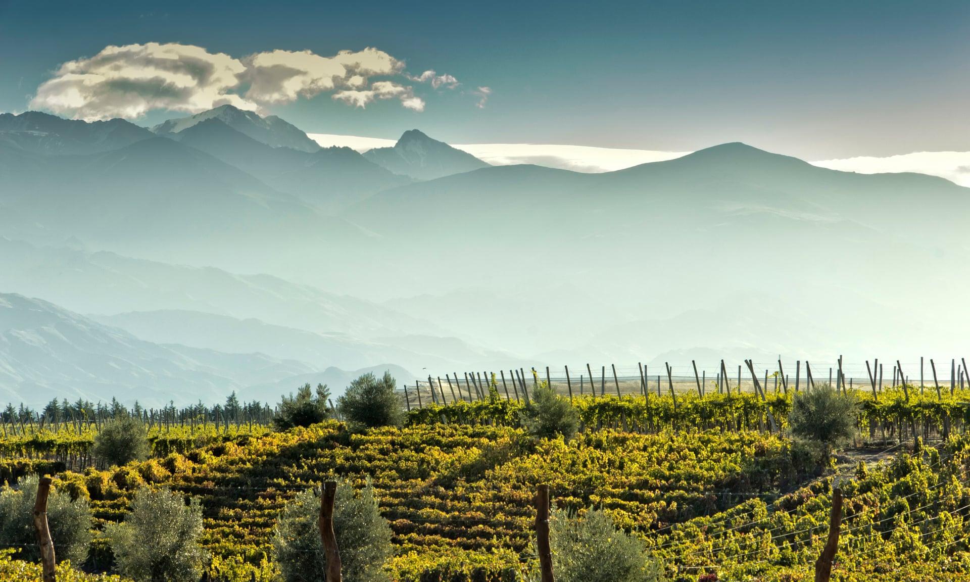 Chile fue el mayor exportador de vinos a Surcorea