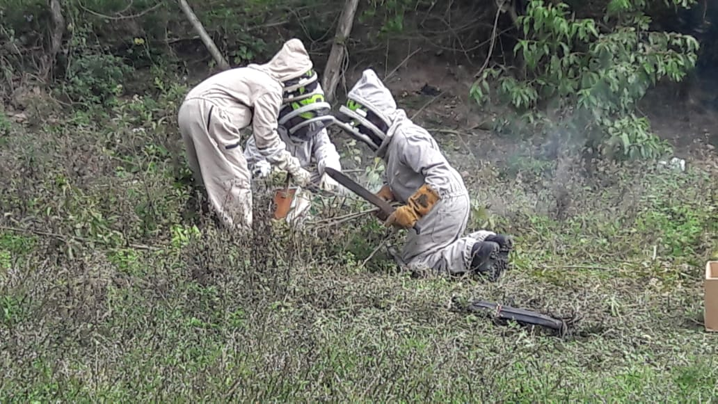 Tragedia en Suaza, adulto mayor murió tras ser atacado por enjambre de abejas - Noticias