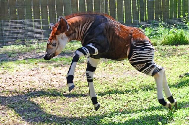 Animales en extincion 25 1