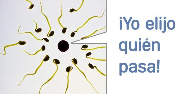 Estábamos equivocados, el óvulo elige al espermatozoide y no al revés