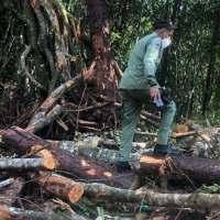 @ambienterd SENPA: Arrestan a varias personas por tala de árboles en Jarabacoa