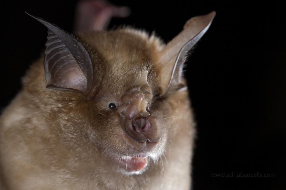 estudio científico de 2007 murciélago