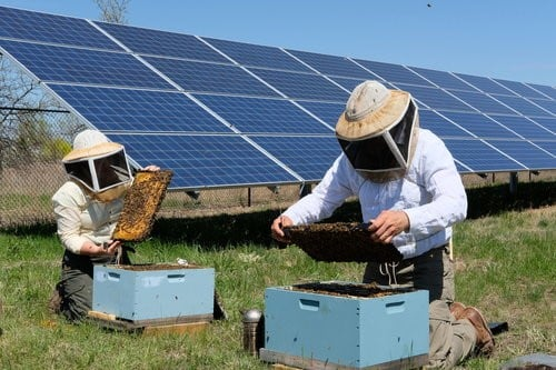 Carmona creará la primera miel solar de España 2