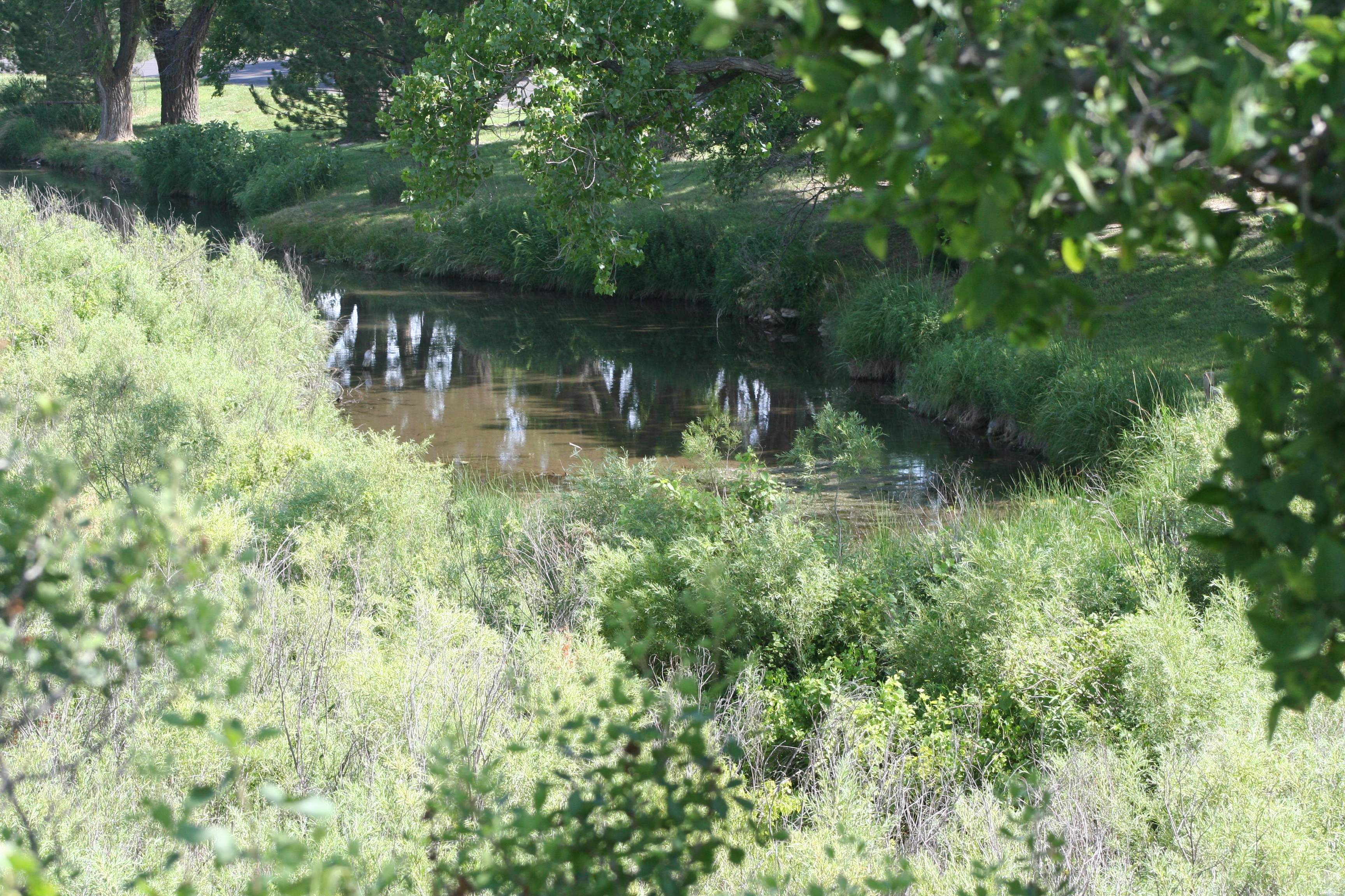 The spring fed pond from the nature trail above the bridge.