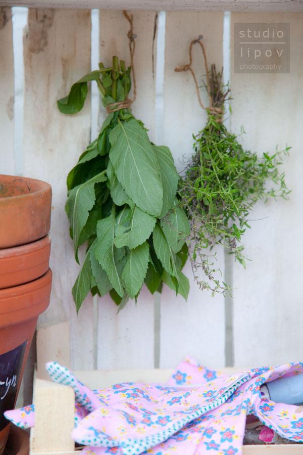 ogród ziołowy_1