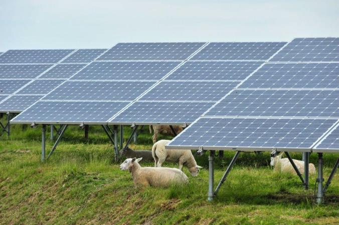 solar_panels_with_sheep_in_belgium