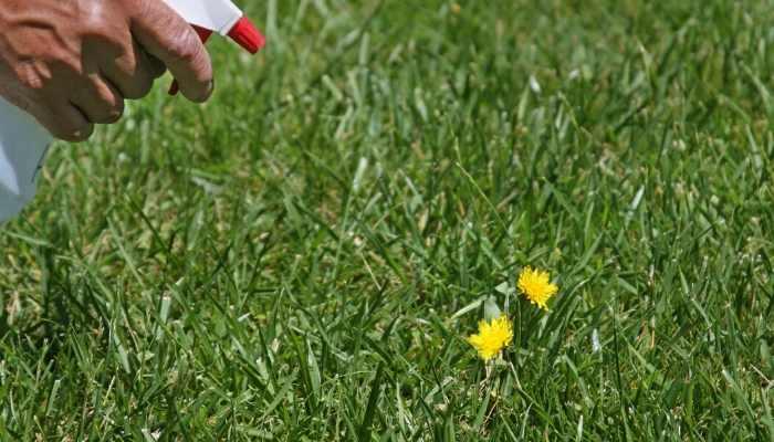 spray on weeds