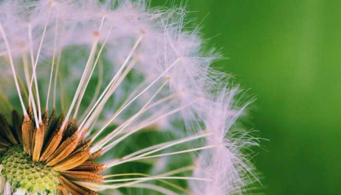 wee seeds