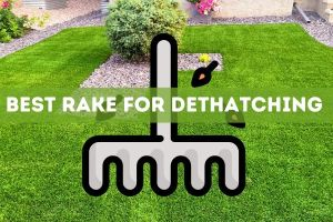 Best Rake for Dethatching