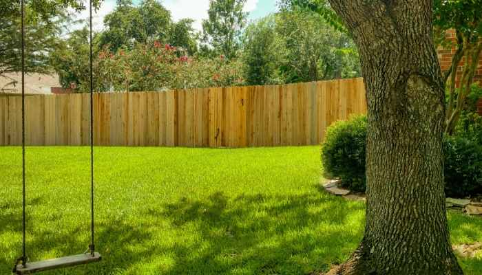 how to grow grass in shade