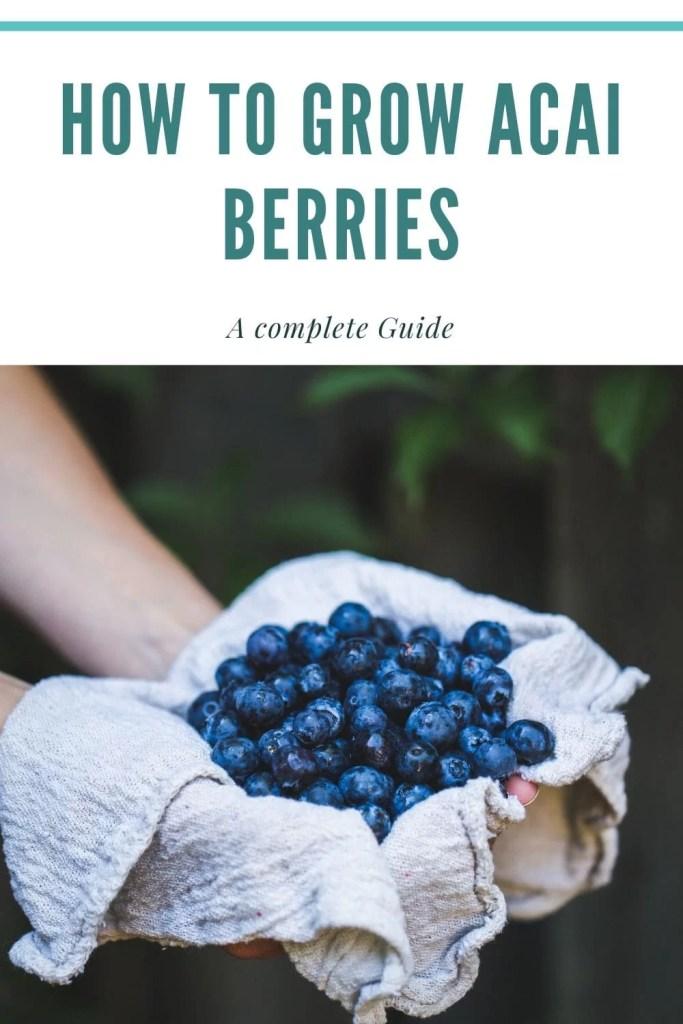 grow acai berries