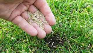 Best Grass Seed for Ohio