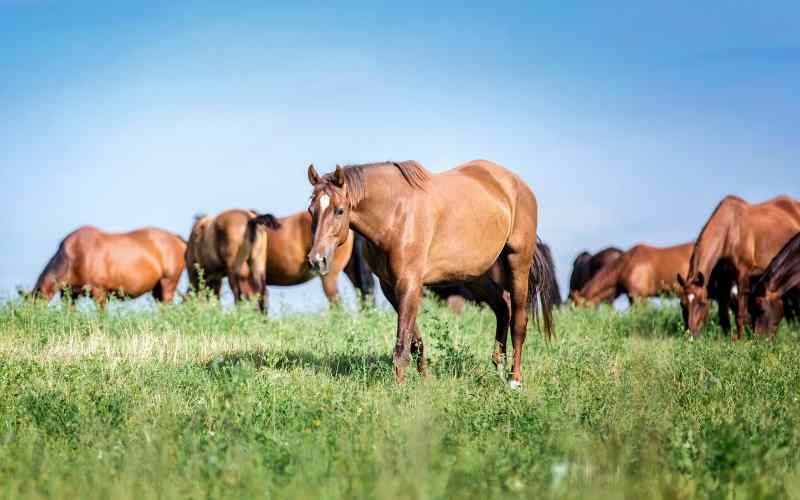 best fertilizer for horse pasture