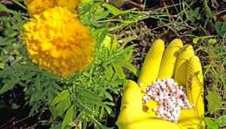 Alaska Fish Fertilizer Review