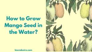 How to Grow Mango Seed in the Water
