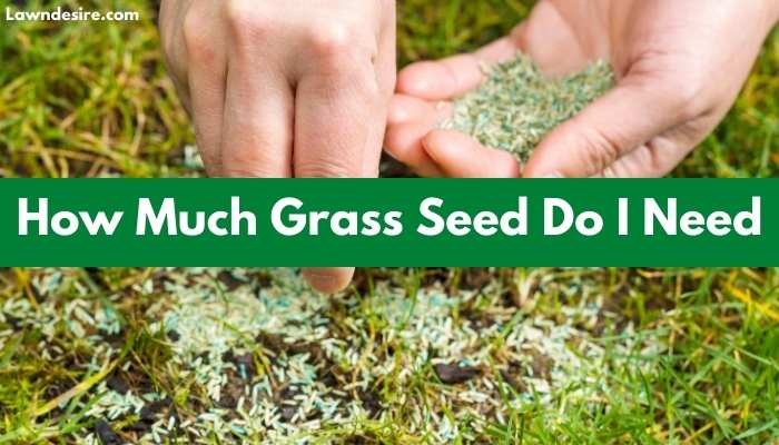 How Much Grass Seed Do I Need