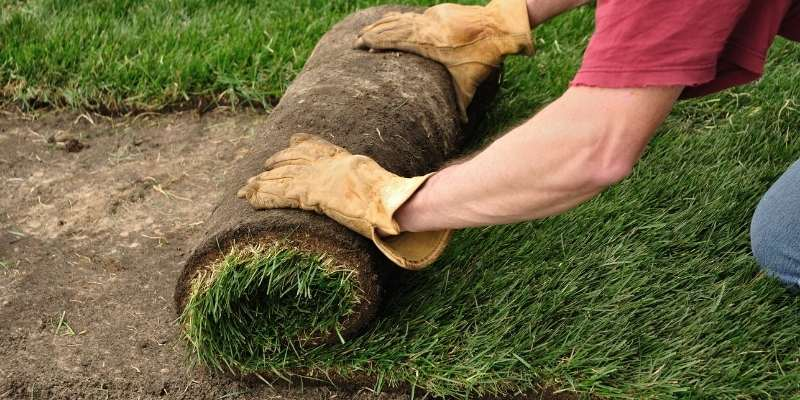 Where to Buy Sod