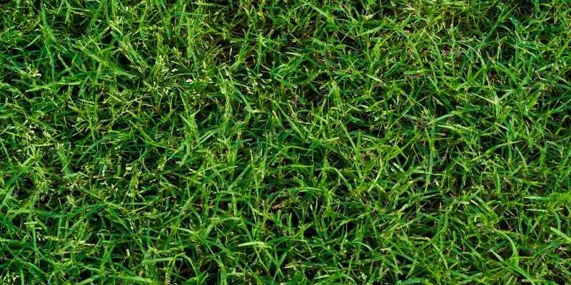 controlling Bermuda Grass In