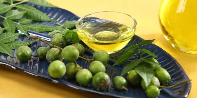 Neem Oil for powdery mildew