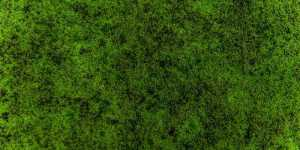 Best Moss Killer For Lawn