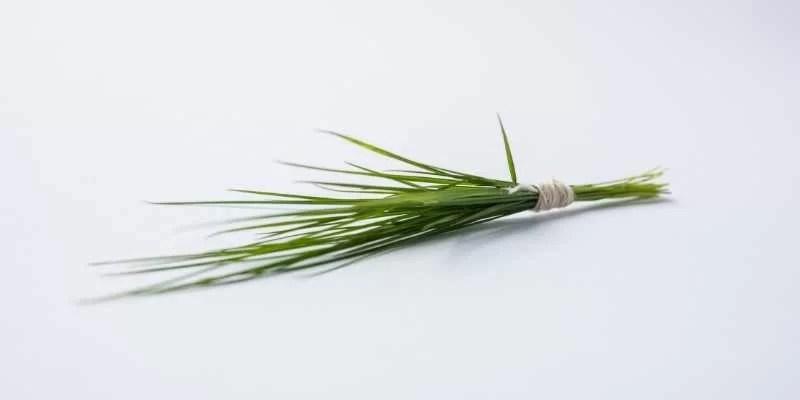 Identify Durva Grass