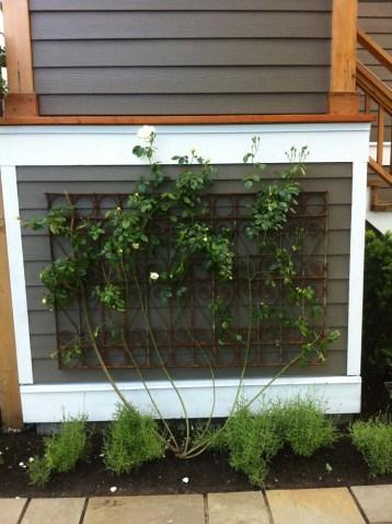 Iron gate rose trellis Vancouver, Rose Trellis installation Vancouver