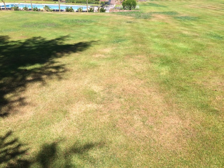 Lawn Dry Patch following Scarification